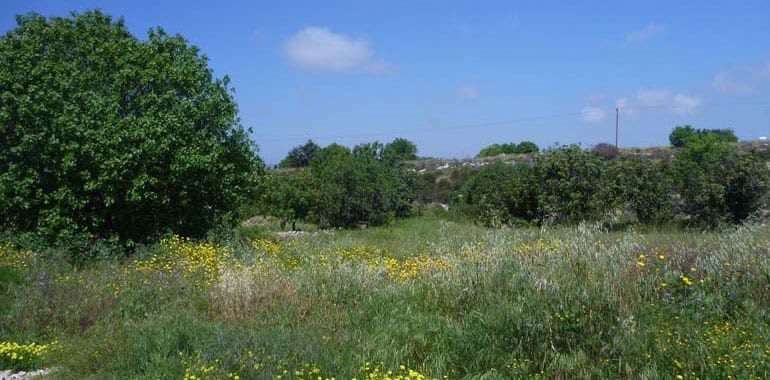 Large plots of Land for Sale in Paphos, Mesogi
