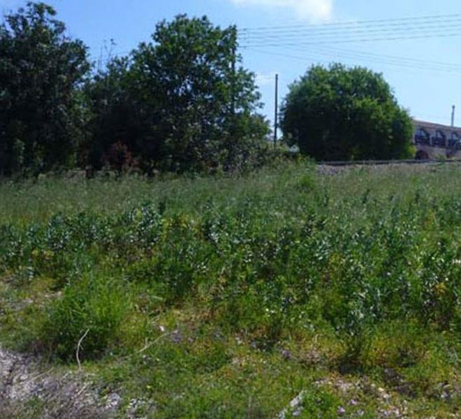 Land for Sale in Paphos' Mesogi Village Area