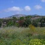 Land for Sale in Paphos' Messogi Village