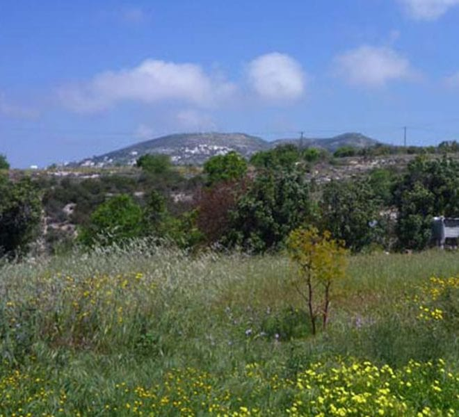 Land for Sale in Paphos' Messogi Village