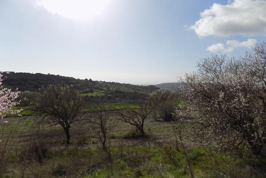 Halkyon villa for sale on large plot Marathunda Paphos_48