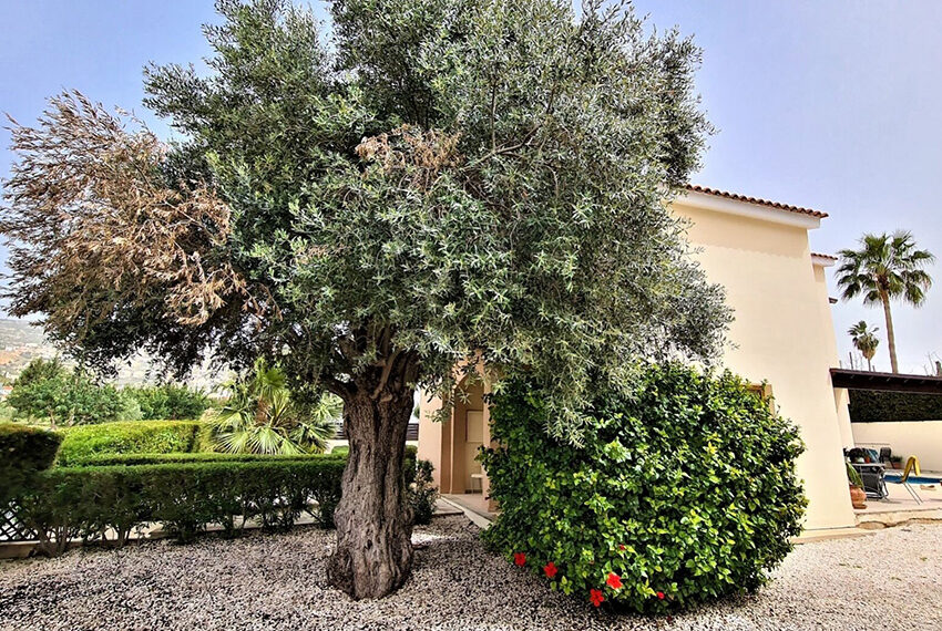4 bedroom villa for sale with private pool & large plot Peyia_7